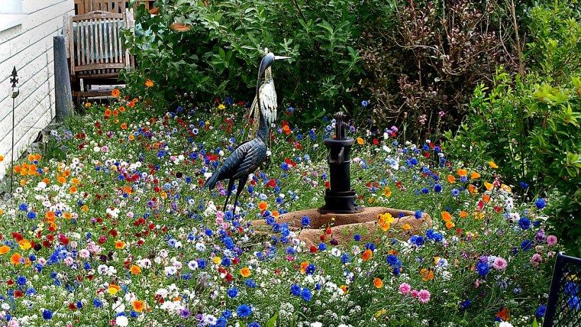 Blumenwiese Bunte Alternative Zum Rasen Garten Derwesten De