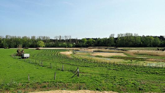 Fertiggestellte Baumaßnahme: Der Blick auf die bepflanzte Hartholzaue lässt auf einen ökologisch hochwertigen Lebensraum schließen.