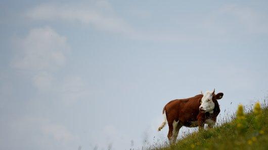 Was mache ich, wenn mir plötzlich im Urlaub eine Kuh begegnet? Die Tierschutzstiftung Vier Pfoten gibt dazu ein paar wertvolle Tipps.