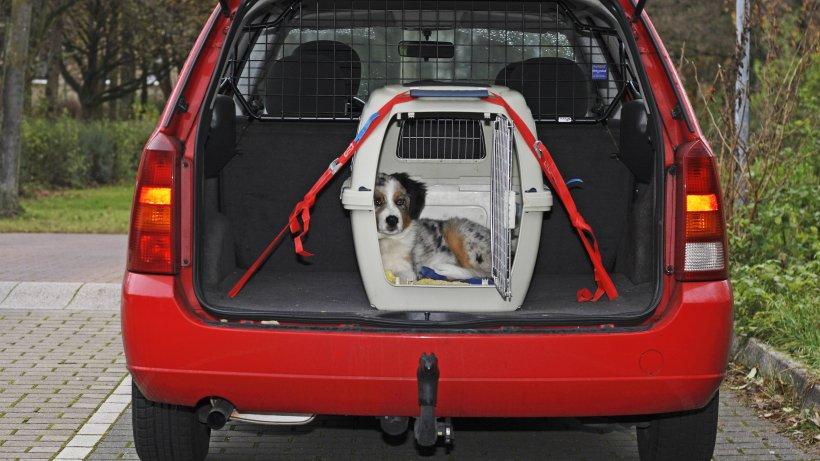 tiere im auto ohne transportbox kann versicherungsschutz kosten auto. Black Bedroom Furniture Sets. Home Design Ideas