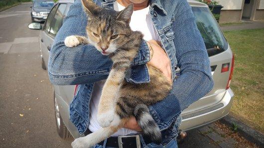 Eine Kripo-Beamtin rettete die Katze aus ihrer misslichen Lage.
