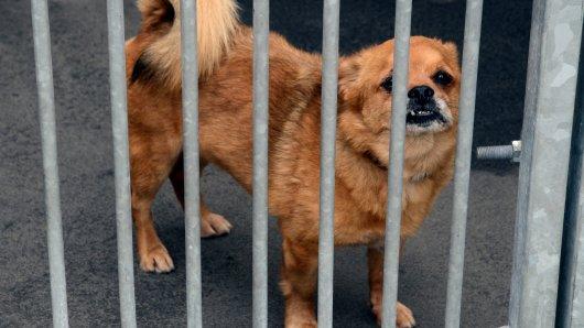In Bochum entfällt ab 2019 die Hundesteuer bei erfolgreich vermittelten Hunden.
