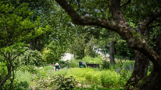 Als der Mann durch den Botanischen Garten spazierte, machte er eine überraschende Entdeckung. (Archivbild: Botanischer Garten)