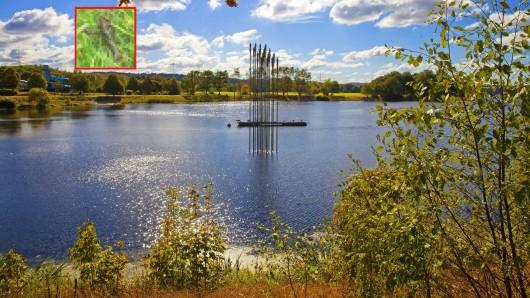 Bochum: Ein Spaziergänger hat am Kemnader See eine Entdeckung gemacht, die für Aufsehen sorgt. (Symbolfoto)