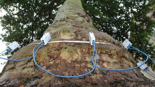 Ein Mann in Bochum entdeckt ein merkwürdiges Gerät an einem Baum. (Symbolbild)