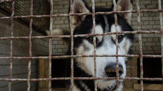 Tierheim Bochum: Ein Hund sorgte für Ärger (Symbolfoto).