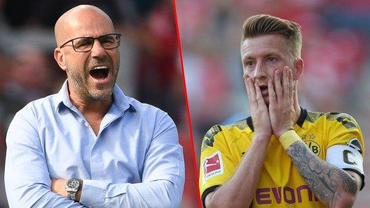 Peter Bosz stichelt gegen den Kapitän von Borussia Dortmund.