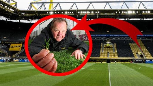 Auf einige Mitarbeiter von Borussia Dortmund wartet in der Sommerpause harte Arbeit.
