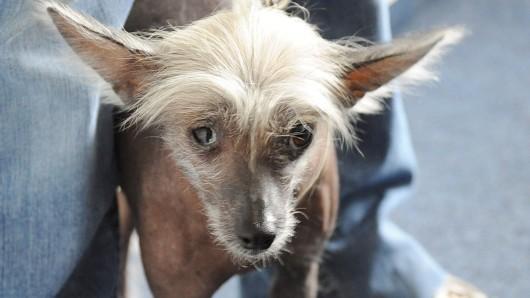 14 Nackthunde hat die Polizei Dortmund aus einer Gartenlaube gerettet.