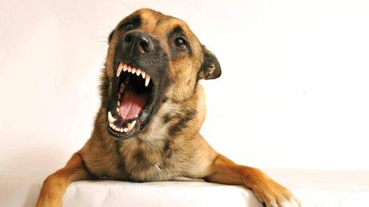 In Dortmund wurde ein Kind von einem Hund angefallen. (Symbolfoto)
