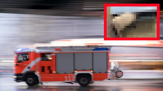 Die Feuerwehr Dortmund wurde zu einem tierischen Notfall gerufen.