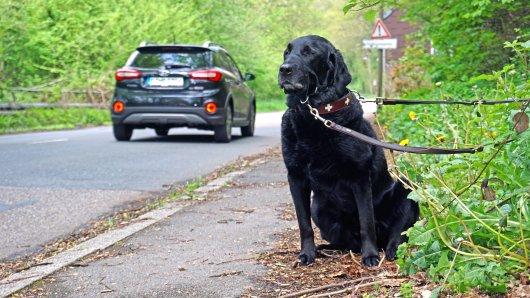 Hund in Dortmund: Findus wurde einfach ausgesetzt. (Symbolbild)
