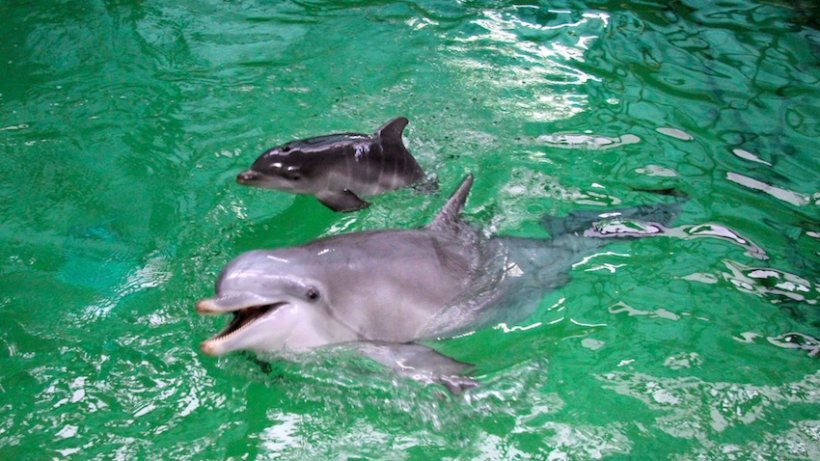 delfinbaby delfinbaby im duisburger zoo ist unerwartet gestorben duisburg. Black Bedroom Furniture Sets. Home Design Ideas