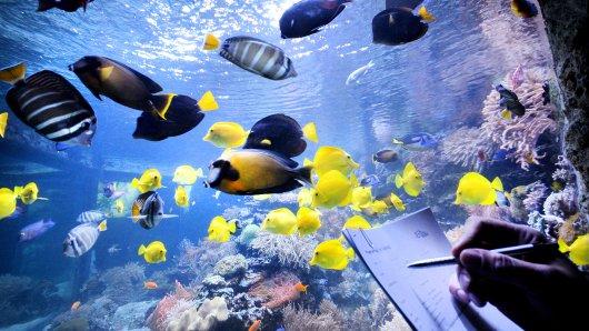 Die Tiere wie hier die Seewasserfische im großen Aquarium mussten im Rahmen der jährlichen Inventur im Zoo in Duisburg wieder gezählt werden.