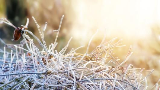 Im Vergleich zu den letzten Jahren ist der Januar 2017 bislang ziemlich kalt.