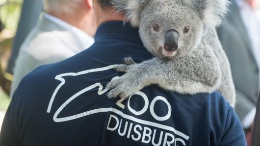 Mehrere Tierarten haben im Zoo Duisburg ein neues Zuhause gefunden. (Archivbild)