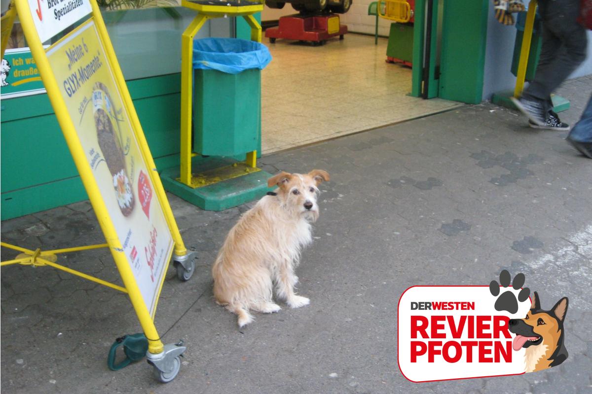 Hunde Verboten Muss Sich Der Besitzer An Diese Schilder Halten Derwesten De