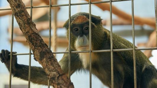 Im Duisburger Zoo ist eine Neustrukturierung geplant. Im Zuge derer soll auch bald das Affenhaus neugebaut werden. (Archivbild)