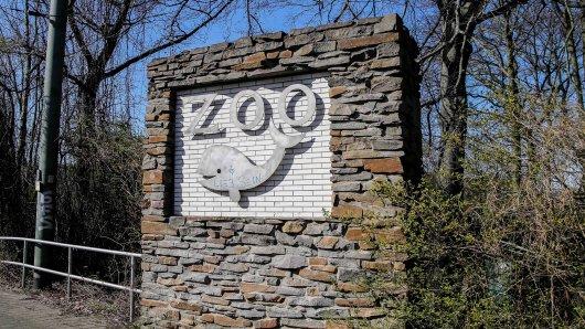 Große Freude im Zoo Duisburg! Es gibt Nachwuchs bei einer bedrohten Tierart. (Symbolbild)