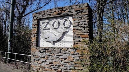 Zoo Duisburg: Freudige Baby-News. Eine bedrohte Haustierrasse hat zum aller ersten Mal Junge bekommen.
