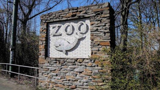 Der Zoo Duisburg feiert einen besonderen Erfolg.