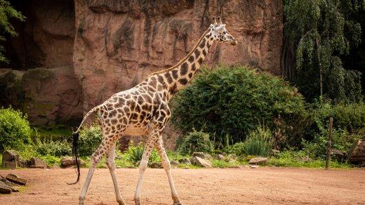 Der Zoo Duisburg hat eine traurige Nachricht. Ein Besucher-Liebling ist tot. (Symbolfoto)