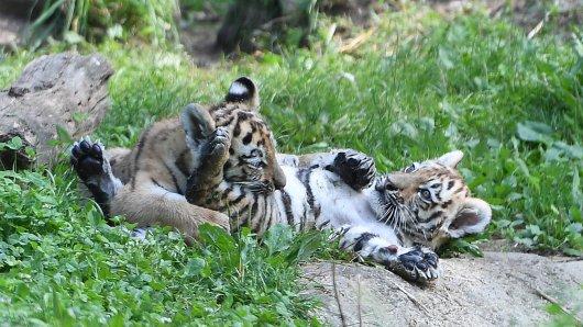 Pfleger aus dem Zoo Duisburg mussten eine erschreckende Entdeckung machen. (Symbolbild)