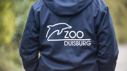 Schock-Fund im Zoo Duisburg! (Symbolbild)