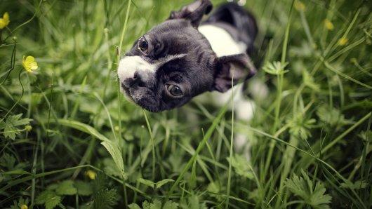 Warum frisst dein Hund Gras