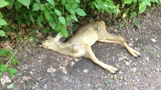 Ein Hund hat im Schellenberger Wald in Essen ein Rehkitz gerissen.