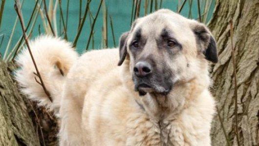 Seit fast vier Jahren ist Toni im Tierheim und wartet auf ein neues Zuhause.