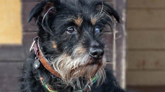 Chucky (12) ist schwer krank und hat nicht mehr lange zu leben. Doch der verschmuste Hund sucht ein Zuhause, in dem er seinen Lebensabend in einer Familie verbringen kann.