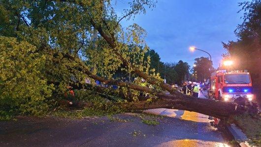 Auf die Frintroper Straße in Essen fiel ein Baum. Infolgedessen musste sie komplett gesperrt werden.