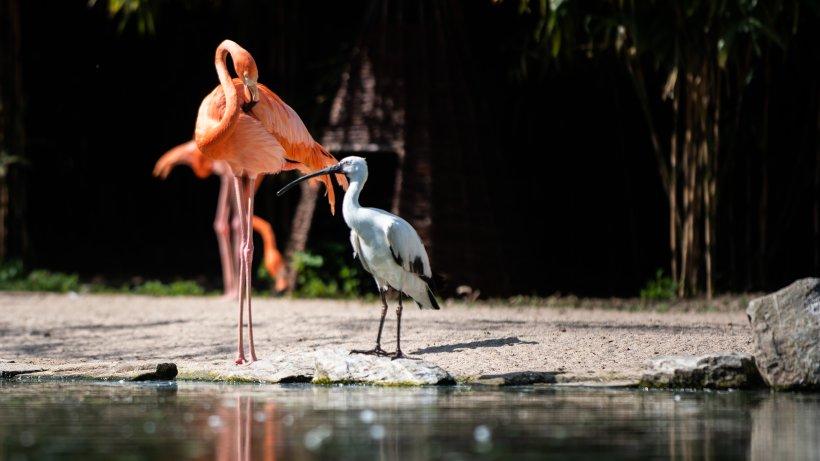 Schönster Zoo In Hessen