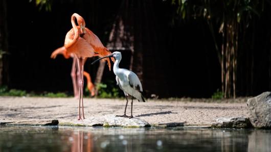 Im Grugapark Essen leben rund 500 Tiere – er gehört zu den beliebtesten Tierparks in ganz Deutschland.
