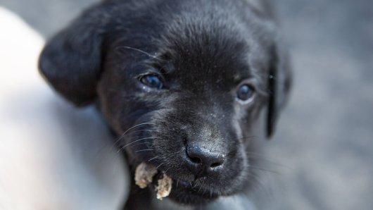Achtung! Wenn dein Hund DAS jetzt frisst, könnte es gefährlich werden. (Symbolbild)