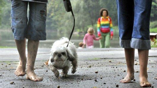 Mit Hunden im Grugapark spazieren zu gehen, macht richtig Spaß. Doch es gibt eine wichtige Sache zu beachten. (Symbolfoto)