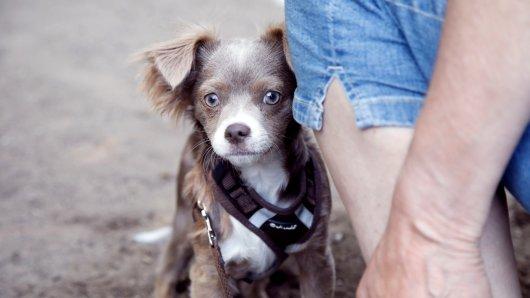 Hund Joschi in Essen trifft beim Spazierganz mit Herrchen auf einen anderen Vierbeiner. Dann wird es unglaublich niedlich. (Symbolbild)