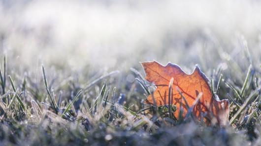 Frost ja, Schnee nein - Auf so einen richtigen Wintereinbruch brauchst du in NRW erst mal nicht zu hoffen.