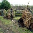 Umgestürzte Bäume auf dem Judenfriedhof  Bild Udo Kreikenbohm