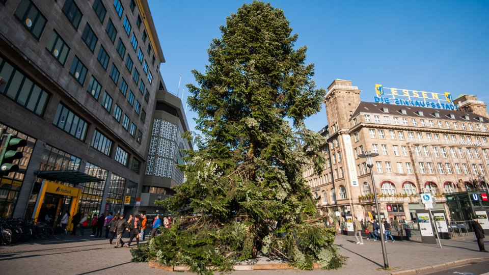 Weihnachtsbaum zum essen