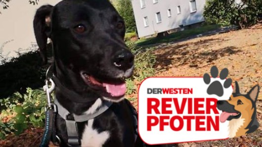 Der Terrier-Mix Bailey wird seit vergangem Freitag vermisst. Der Angsthund ist extrem schreckhaft.