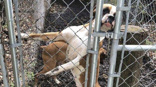 Bei der Inspektion eines Hauses im US-Staat New Jersey hat die Polizei 44 tote Hunde in Plastiktüten verpackt in Gefriertruhen entdeckt.