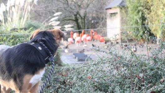 Ab Januar dürfen die Hunde donnerstags und freitags in den Zoo Duisburg rein.