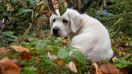 Um die Jahreswende häufen sich traurige Schicksale von Hunden. (Symbolbild)