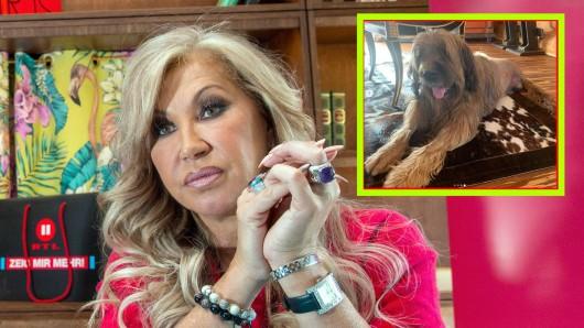 Carmen Geiss hat wegen des Schicksal ihres Hundes Dex viel geweint.