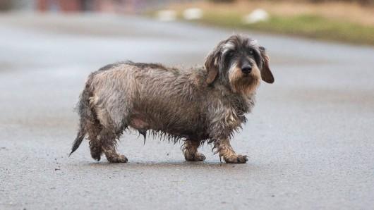 Am Samstagmorgen lief ein Hund verängstigt auf der A40 im Bereich Mülheim Styrum herum. (Symbolbild)