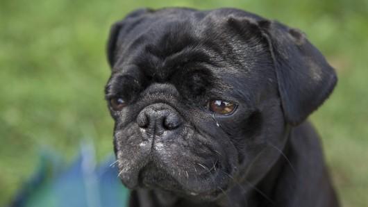 Hund Edda ist gepfändet und von der Stadt Ahlen bei Ebay-Kleinanzeigen verkauft worden.  (Symbolbild)