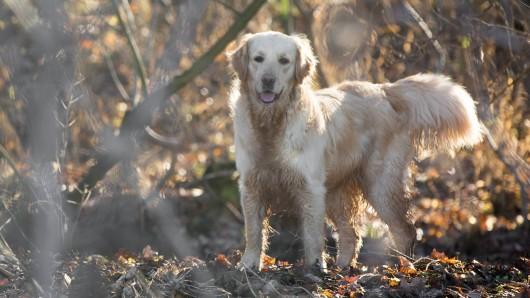 Ein Hund verbringt einige Tage im Wald und schließt eine sonderbare Freundschaft. (Symbolbild)