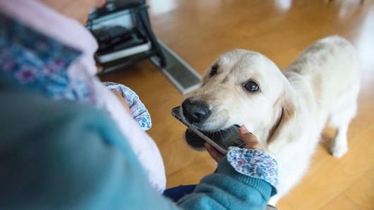 Der Hund Toli weicht als Assistenzhund seinem Herrchen nicht von der Seite. (Symbolbild)